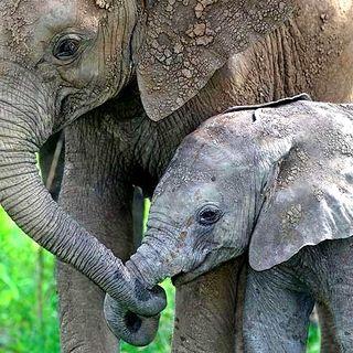 Elephant-baby-mom-2